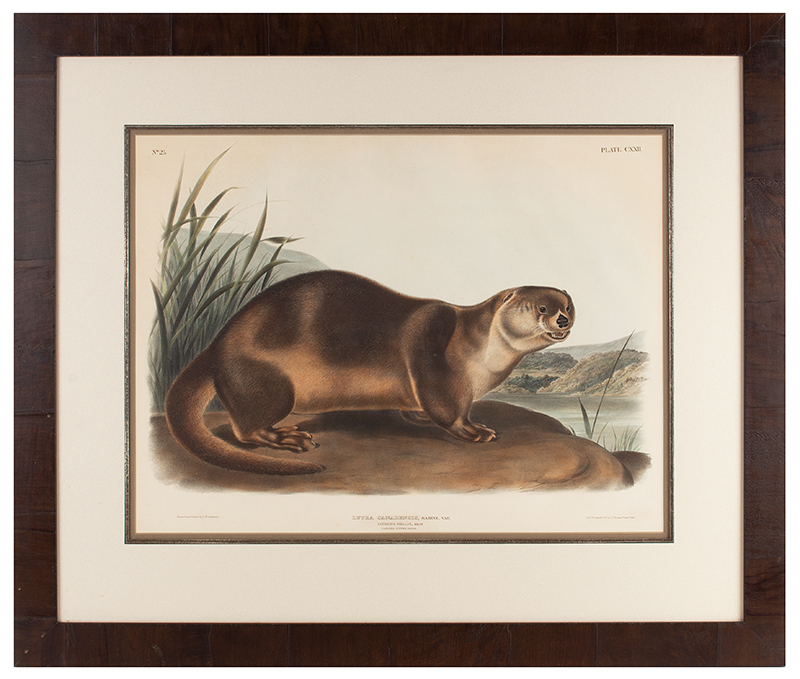 Antique 19th Century Audubon Large Folio Hand Colored Lithograph Canada Otter  Philadelphia ,1847 Plate 122, entire view