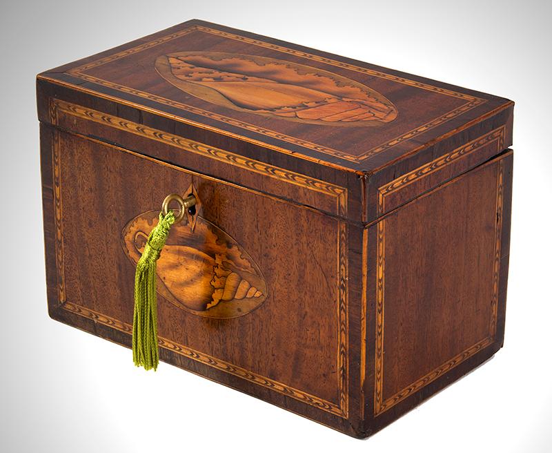 Georgian Mahogany Tea Caddy, Double Conch Shell Inlays English, circa 1795-1810, entire view 1