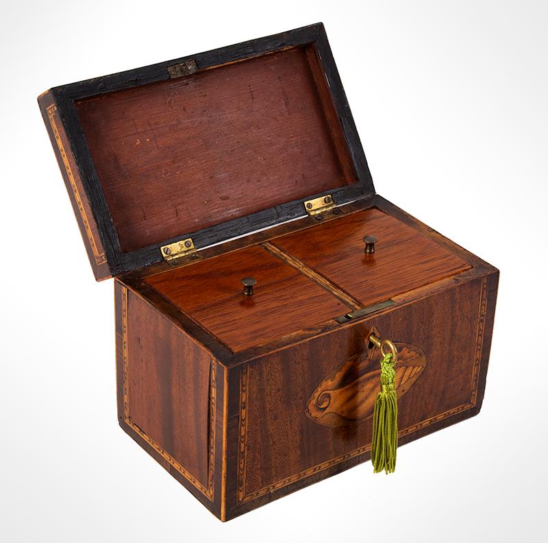 Georgian Mahogany Tea Caddy, Double Conch Shell Inlays English, circa 1795-1810, entire view 2