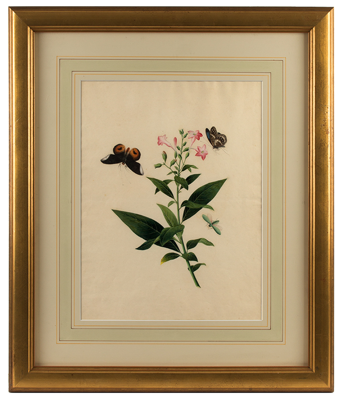 Watercolor, Lovely, Fine and Outstanding,    Chinese Botanical,