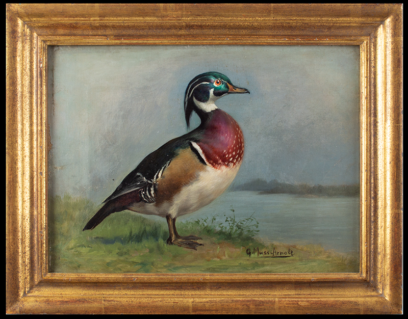 Gustav Muss-Armolt, Painting, Alert Wood Duck, Arm & Hammer Bird Trading Cards Illustration Oil on canvas, entire view