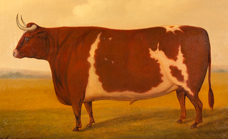 Painting, Prized Bull, From Iowa Collection Signed and dated on verso, Joe Jo____S. 1864, entire view sans frame