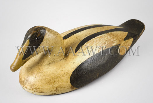 Antique Decoy, Eider, 20th Century, angle view