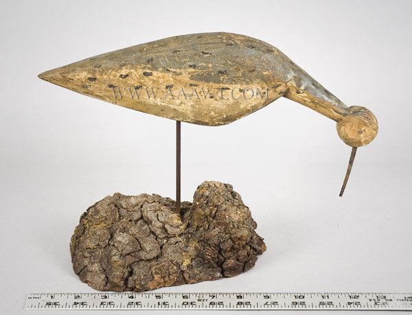 Antique Decoy, Shorebird, Feeding Postion, 19th Century, with ruler for scale