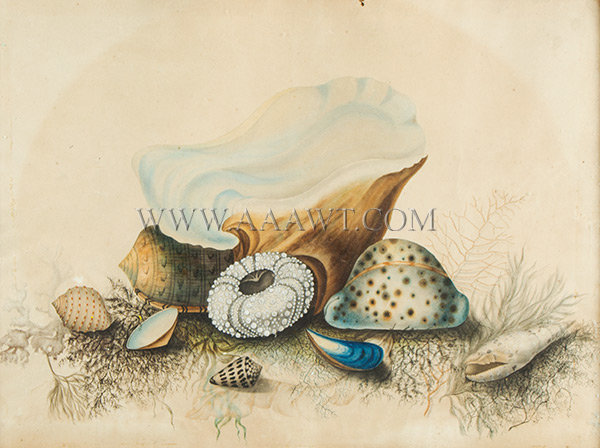 Antique Watercolor Study of Seashells, New York, Late 1840's, close up view